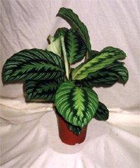Субстрат молодые растения