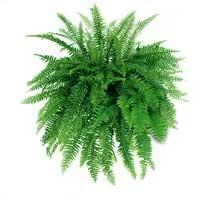 Под магическимвоздействием Солнца это растение имеет острые иголки, которые оражают и