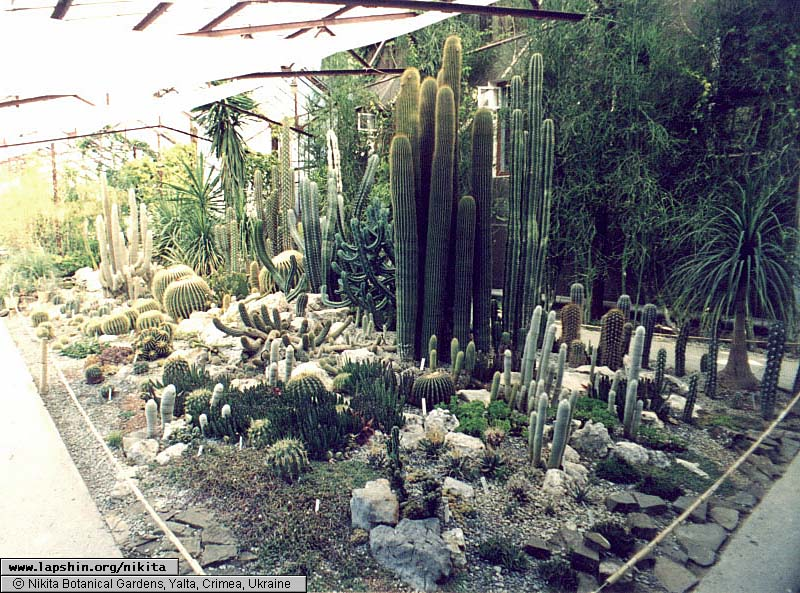 Small Cactus Garden Design rock garden designs small yard landscaping ideas source Garden Design With Cultivar Cacti Writing A Book Together With Coleus Plants From Lapshin