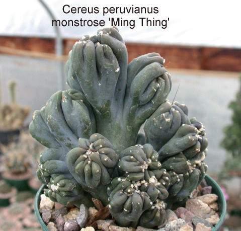 Cultivar Issue 5 27