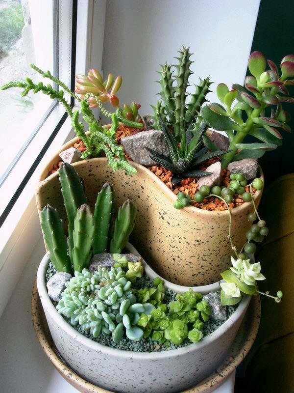 Композиции из суккулентов и кактусов