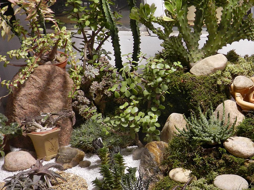 Суккулентные растения Петр Лапшин каталог для заказа