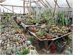Часть растений можно заказать